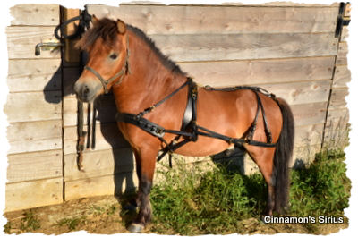 driving harness for miniature horse