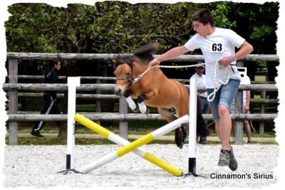 jumping 		-concours